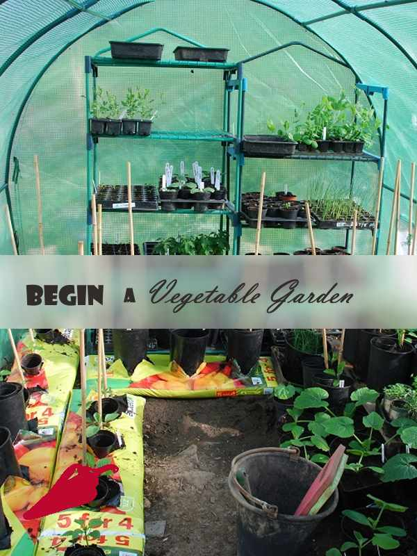 Begin a Vegetable Garden