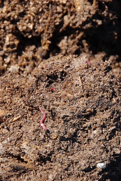 Compost And Compost Worms