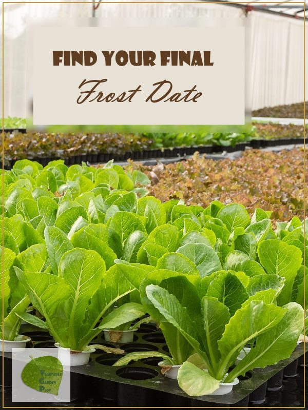 Find Your Final Frost Date