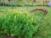 Start a Vegetable Garden - what to plant