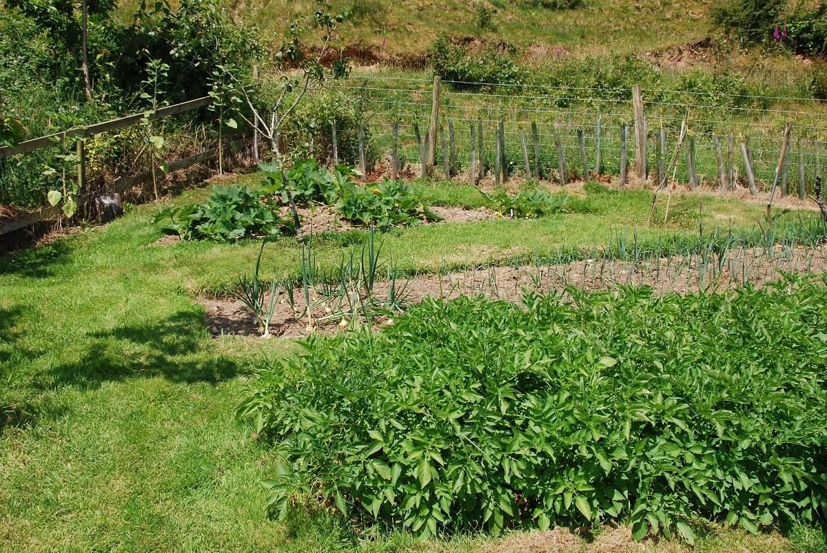 Vegetable Garden Flat Beds